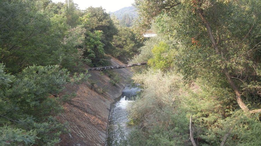Los Gatos, California Waterway Water Course Urban Meets Nature Pipline  Urban Forest Flowing Water Flowing Stream