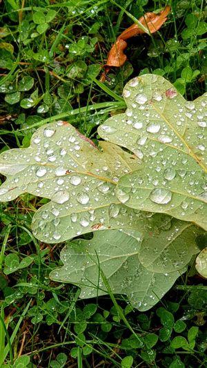 """"""" Raindrops """""""