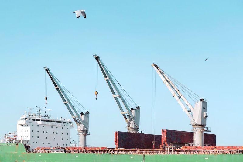 Vibrant Birds Bird Cranes Crane Harbour Machinery Crane - Construction Machinery Sky Construction Industry Architecture Industry Clear Sky Nature Flying Business Built Structure Development Low Angle View Pier