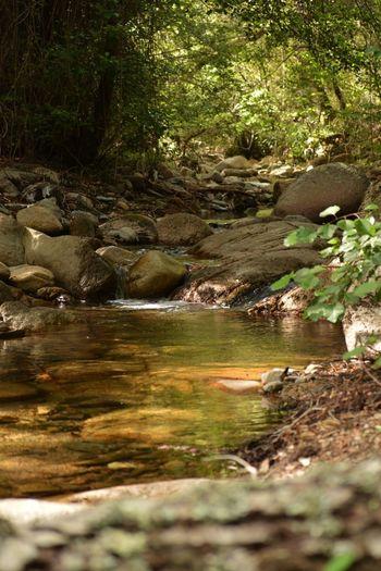 The Great Outdoors - 2018 EyeEm Awards Sardegnaofficial Santadi Sardegna Pantaleo Tree Water Bird Forest River Waterfall Flowing Water
