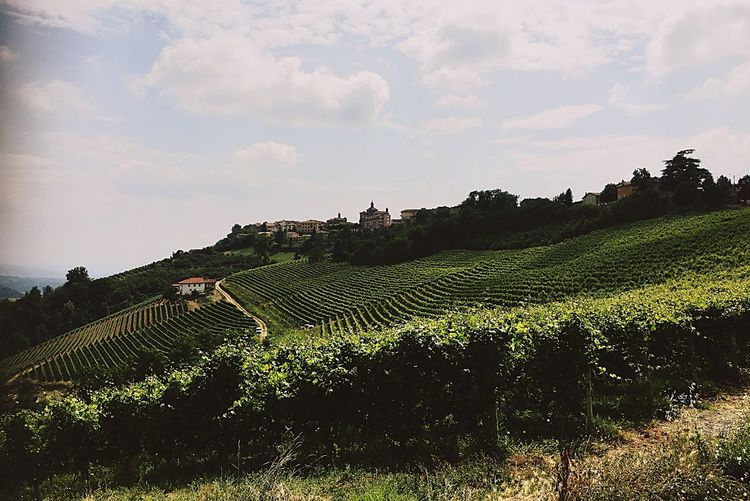 Novello Italy🇮🇹 Winefields Wineyards Nature Summer ☀ Taking You On My Journey 😎 EyeEm Best Edits 43 Golden Moments, Shadows & Lights Travel Photography EyeEm Gallery World Of Wine Heaven Above Special👌shot Wine Tasting On The Way