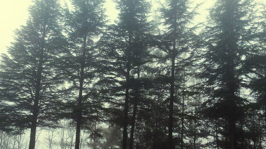 Pattern Pieces Nature Forest Park Pine Trees environment Brunches Environment fog Modern Pattern