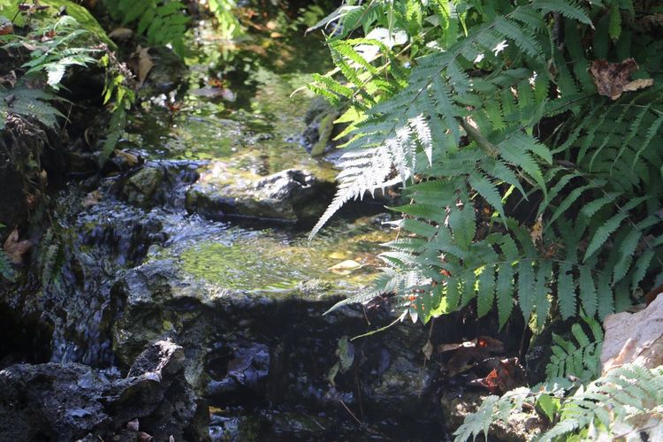 Nature Beauty Canon Canon 70d Beauty In Nature Day Outdoors Photography Scenics Canonphotography No People Relaxation Water Journey Tranquil Scene Rocks Florida Unedited Natural Mini Waterfall
