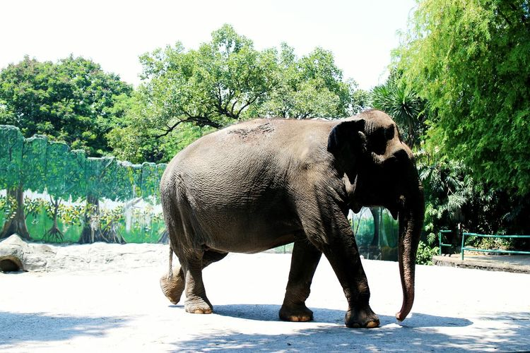Throwback on the time we went to the zoo. Nature Photography Elephant Animal Love Summer Captured Sunshine Chillafternoon Capturetoday Streetphotography Afternoon Walk Travel Explore Zoo Wildlife Natures Diversities