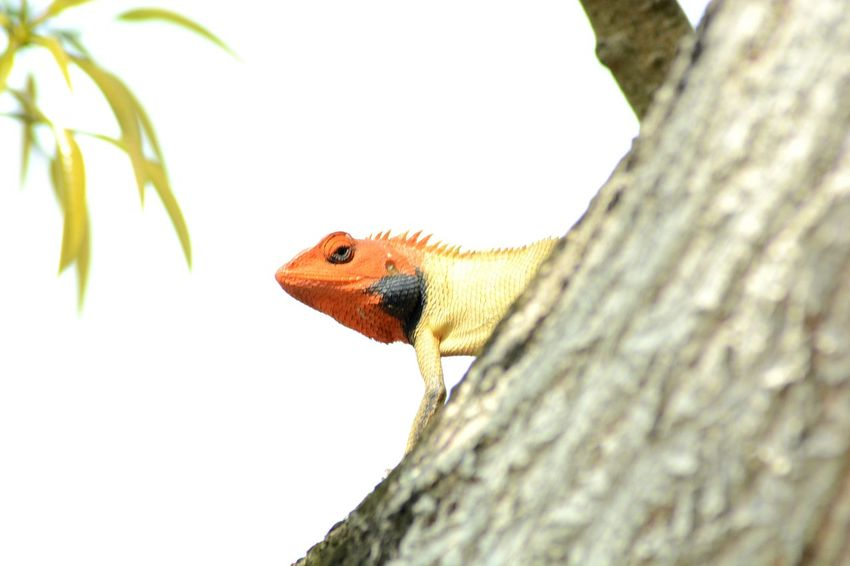 EyeEm Selects Tree Trunk Reptile Lizard Close-up Tree Nature Chameleon Day Branch Beauty In Nature