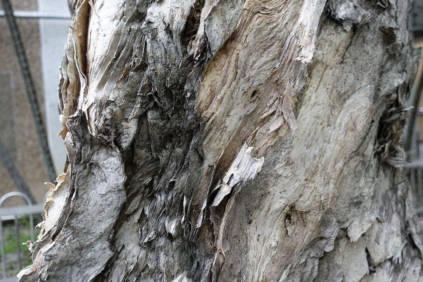 tree bark Tree Bark Bark Texture Nature