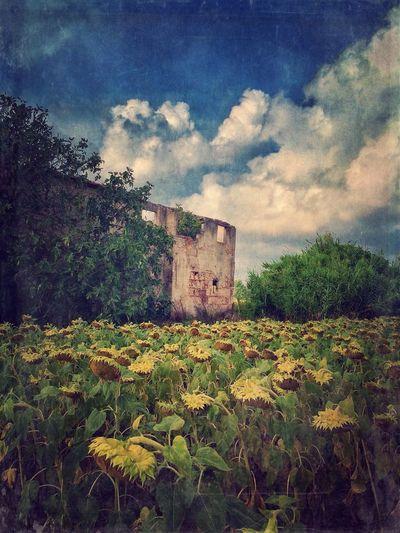 EyeEm Best Shots NEM Submissions WeAreJuxt.com Iphoneonly EyeEm Best Shots - Landscape NEM Mood