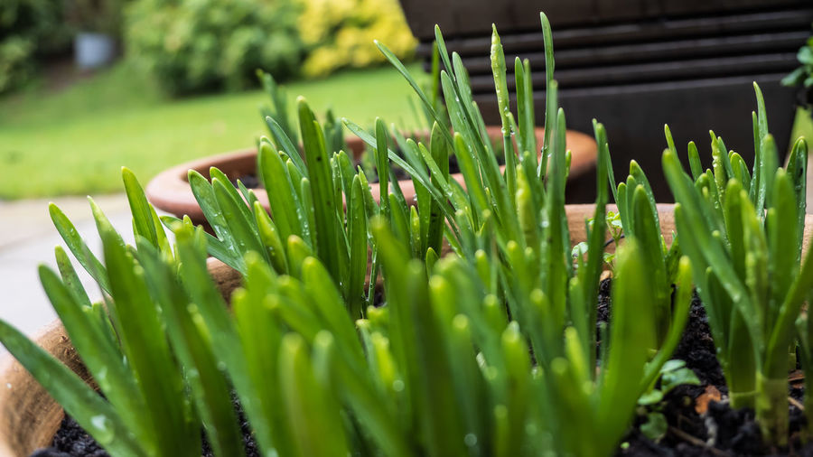 Close-up of succulent plant on field