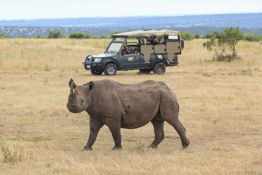 Africa Animal Themes Black Rhino Endangered Animals Endangered Species Enviroment Poaching Protect Our Future Protect Our Wild Life Protectournature Safari Endangered  Engagement Photography