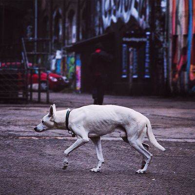Sneaking around Dog Berlin Abstract Streetphotography Colors Light Walking Around