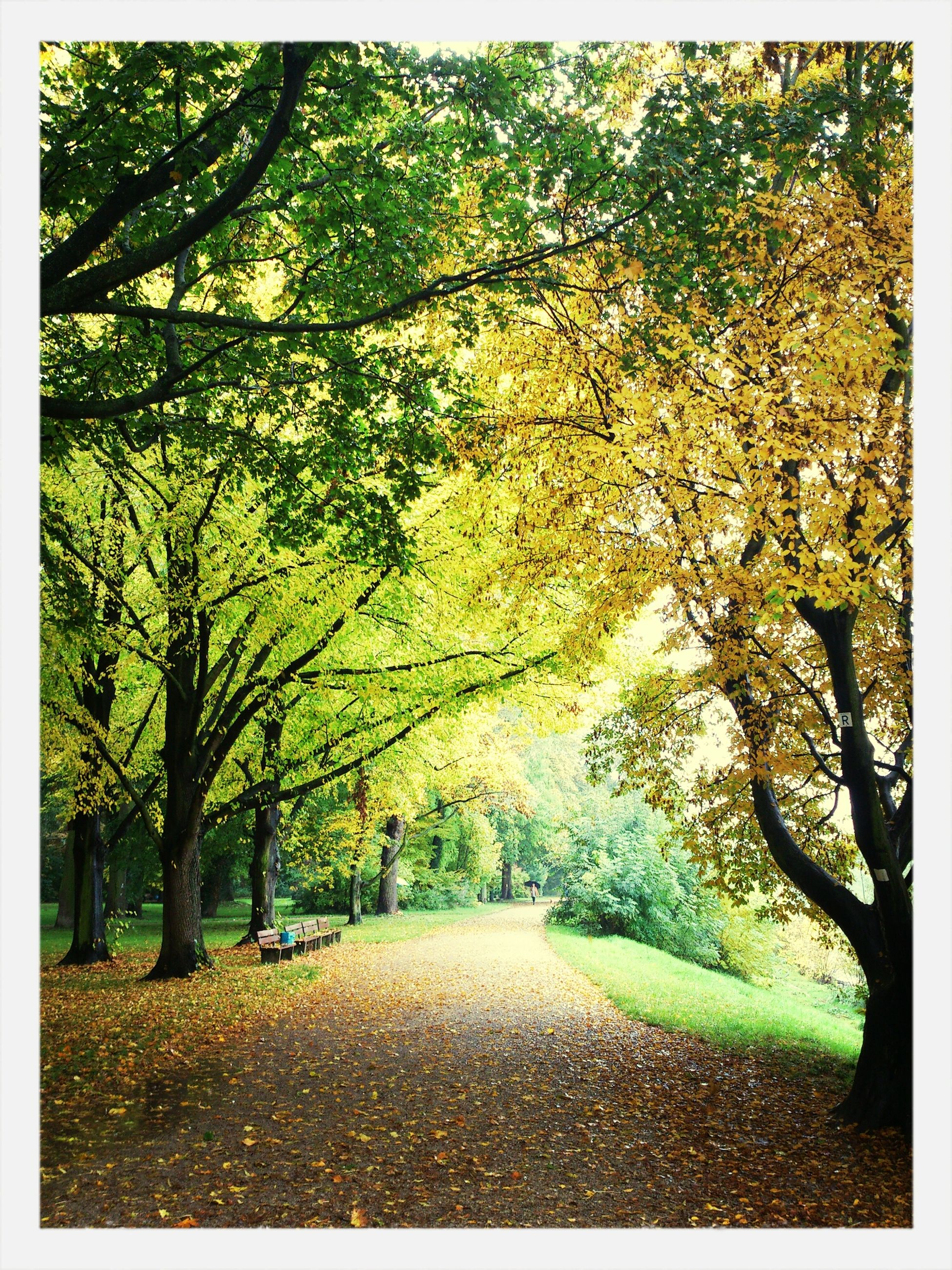 tree, transfer print, autumn, tranquility, the way forward, growth, change, auto post production filter, nature, tranquil scene, beauty in nature, branch, season, leaf, scenics, footpath, diminishing perspective, green color, road, day