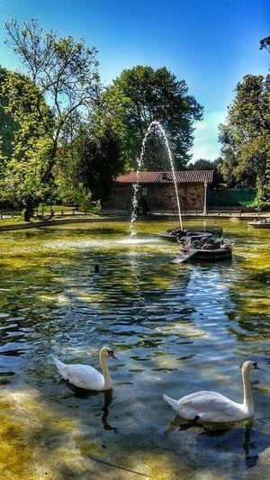 Nature_collection Park Favourite Park EyEm Bestseller Colours EyeEm Nature Lover Springtime Natural Beauty Reflections Water Reflections Natural Water