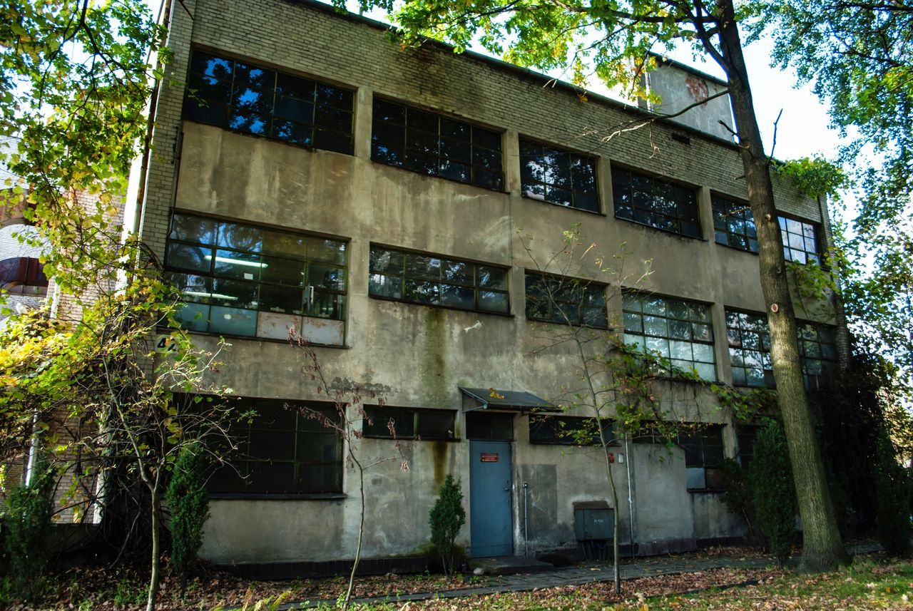 tree, architecture, building exterior, built structure, outdoors, abandoned, no people, day