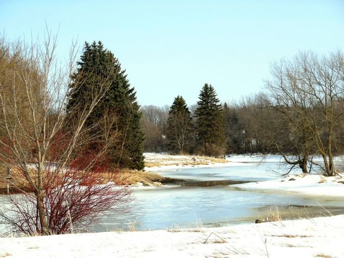 Landscapes With WhiteWall Landscape_photography Landscape_Collection Nature_collection Minnesota Nature Winter_collection Minnesota Winter Tree_collection  Nature Photography Snowscape
