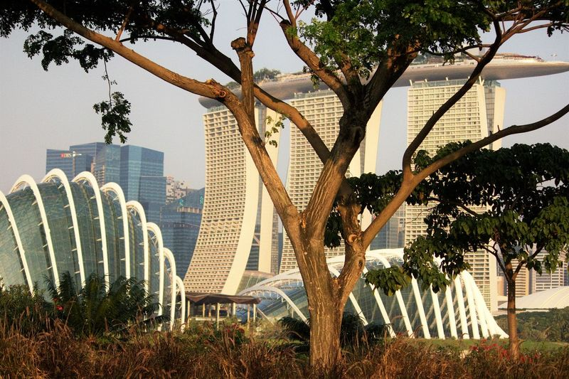 Garden with a view Architecture Garden Hotel Iconic Buildings Singapore View Travel_destination Tree Tropical Climate