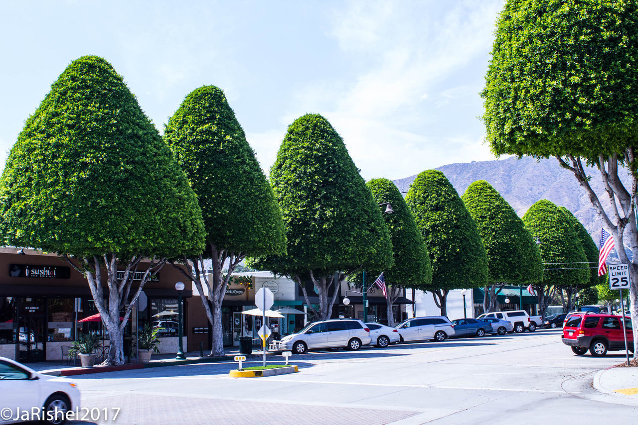 tree, transportation, car, mode of transport, day, growth, outdoors, green color, land vehicle, sky, sunlight, no people, nature, city