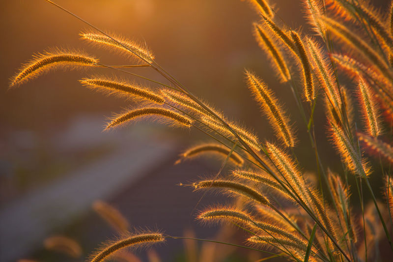 flowering grass in the garden Agriculture Beauty In Nature Cereal Plant Close-up Day Flowering Grass In The Garden Freshness Growth Nature No People Outdoors Palm Tree Plant Sky