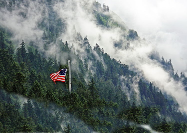 American flag in pine forest