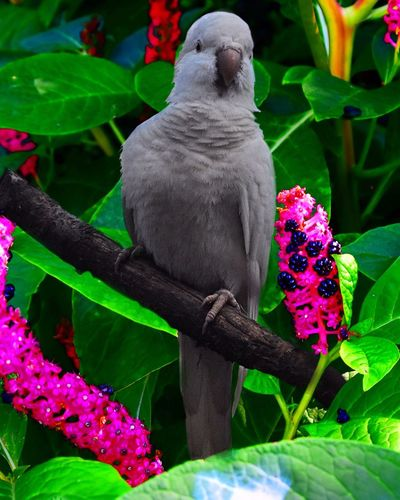Animals In The Wild Bird Color Portrait Whites Habitat Tropical Climate Alertness Protect Wildlife Outdoor Photography Nature Flora&Fauna Climate