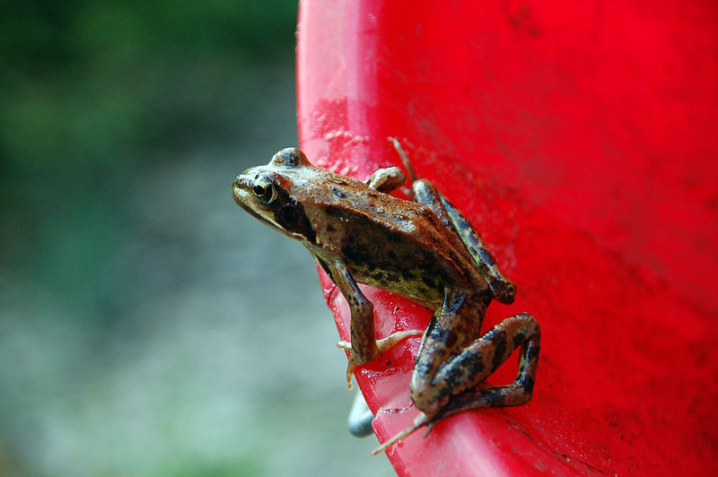 Close-Up Of Frog On Container