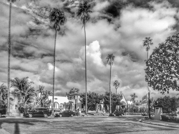 Palm Tree Sky Tree Cloud - Sky Car Outdoors Day City Nature No People Building Exterior Growing Tranquility Scenics Tranquil Scene Non-urban Scene Countryside Foggy Idyllic Calm Exterior Remote Coconut Palm Tree Storm Cloud Date Palm Tree Settlement TOWNSCAPE Residential Structure Overcast Building