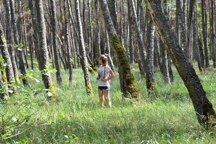 People One Woman Only Tree Young Women Forest Full Length Summer Standing Grass Tree Trunk Woods Growing
