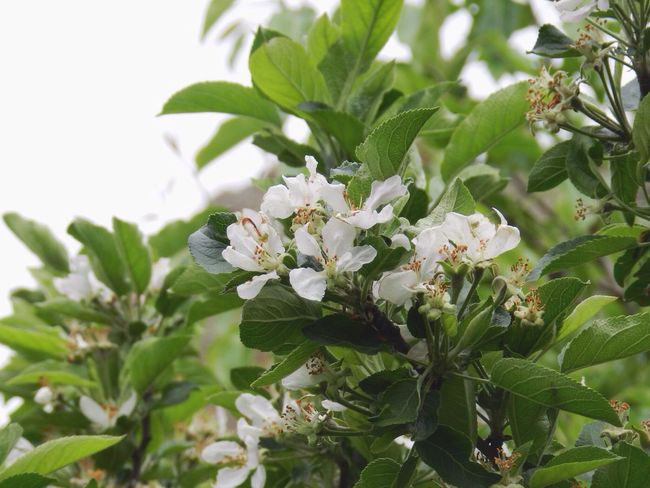 Blossom Taking Photos Eye4photography  Plant Plant Part Flowering Plant Flower Beauty In Nature Nature Green Color No People