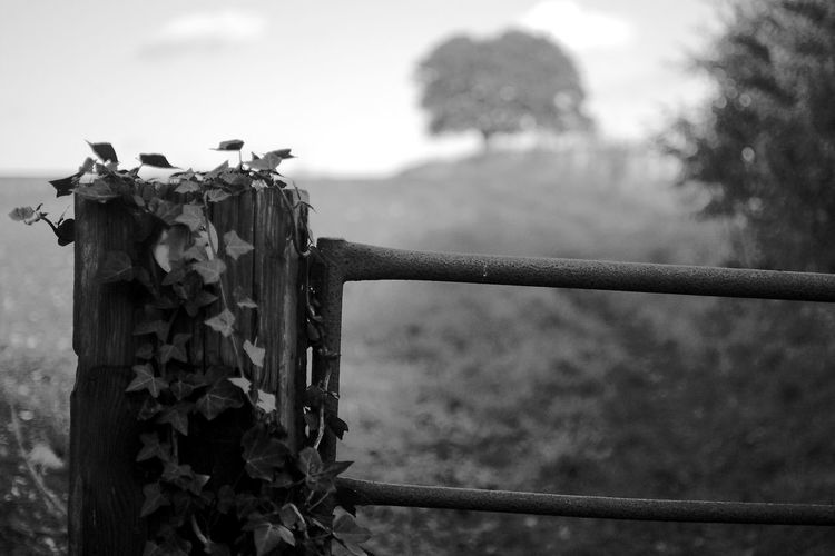 The Journey Focus On Foreground Nature Metal Day Plant No People Barrier Boundary Fence Outdoors Wood - Material Sky Gate Path Blackandwhite Black And White Journey