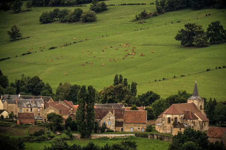 Agriculture Architecture Beauty In Nature Building Exterior Built Structure Burgundy Community Day Farmhouse Field France Grass Green Color High Angle View House Landscape Nature No People Outdoors Residential Building Rural Scene Scenics Sheeps Travel Destinations Tree