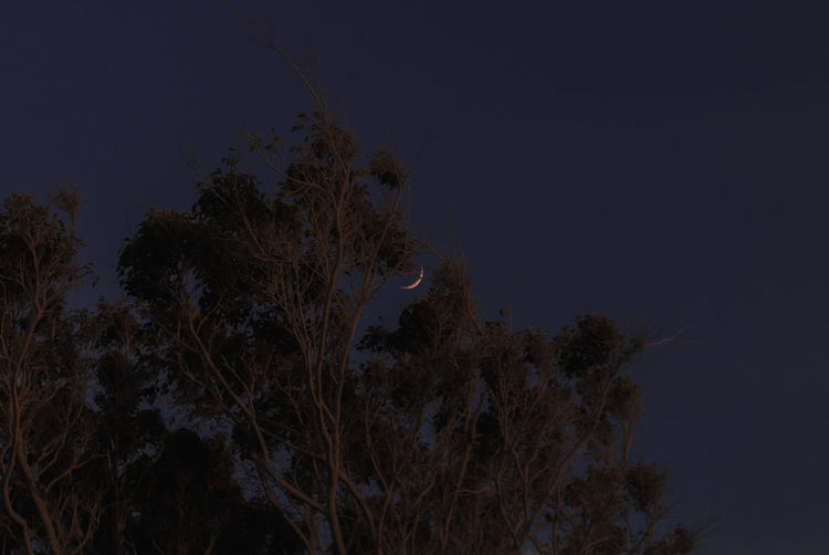 Plant Sky Night Tree Growth No People Nature Tranquility Low Angle View Beauty In Nature Tranquil Scene Outdoors Scenics - Nature Copy Space Branch Land Moon Space Star - Space Moonlight