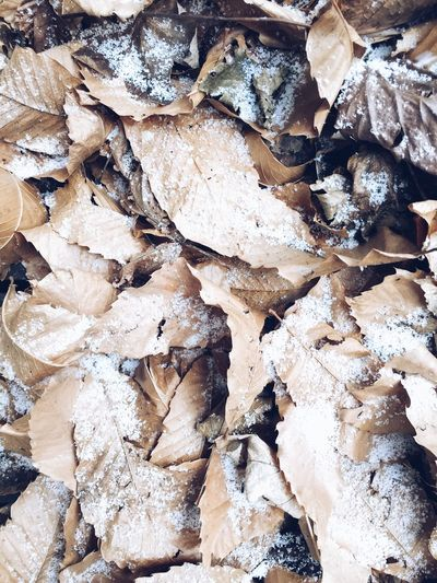 dry leaves and light snow Full Frame Wintertime Snow Backgrounds Full Frame Abundance Large Group Of Objects No People Day Leaf Close-up Nature Outdoors