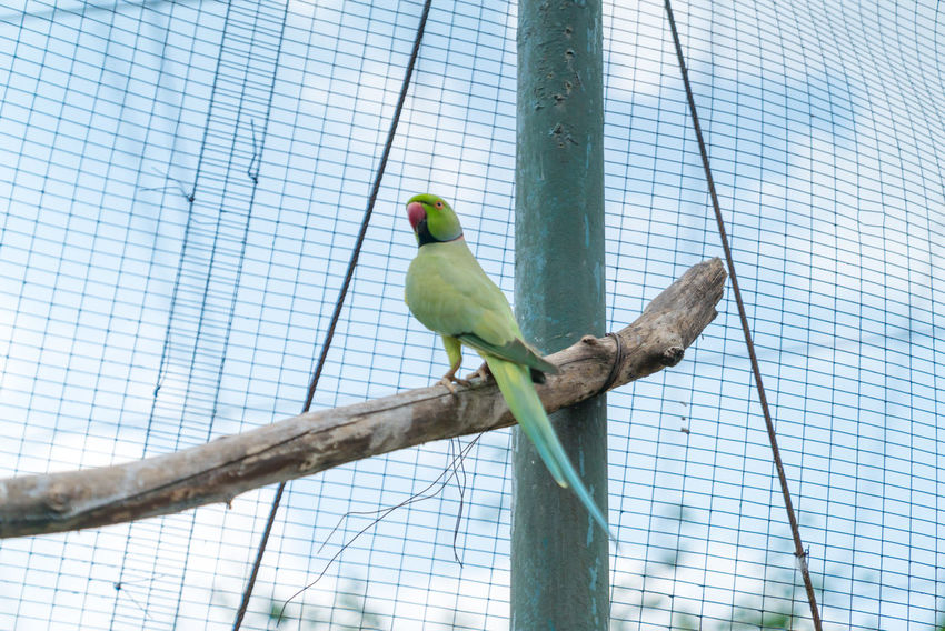 KL Bird Park. Bird in captivity. Animal Themes Animal Wildlife Animals In Captivity Bird Branch Budgerigar Day Low Angle View No People Outdoors Parrot Perching