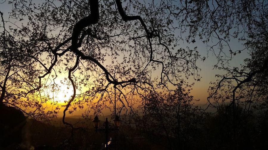 Hayat ta boyledir, koca cinar gibi dallanir, budaklanir... Gunesin battiginda, ne agac kalir ne de hayat ! Bursa İnkaya Inkayaçınarı Dogalhayat Tree Ulu Cinar Wood Nature Naturephotography Relaxing Yasam Sun Sunset Sunset_collection Lights Reflections Silence Uludag Paradise Turkey Plane Flowers