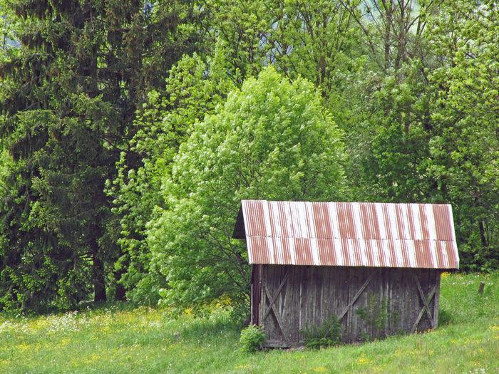 View of hut in grassy field
