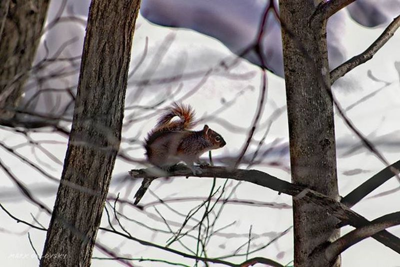 Swift little guy... Had trouble keeping up with him, lol Squirrel Cute Cuteanimals Animalsofinstagram Animallovers Animal Animals Snow Winter Outside Instalike Instafollow Instagood Photooftheday Picoftheday