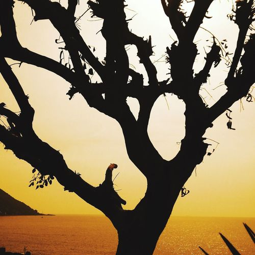 Sky Silhouette Sunset Tree Branch Nature Beauty In Nature Water Plant Scenics - Nature Tranquility Sea Sunlight No People Outdoors