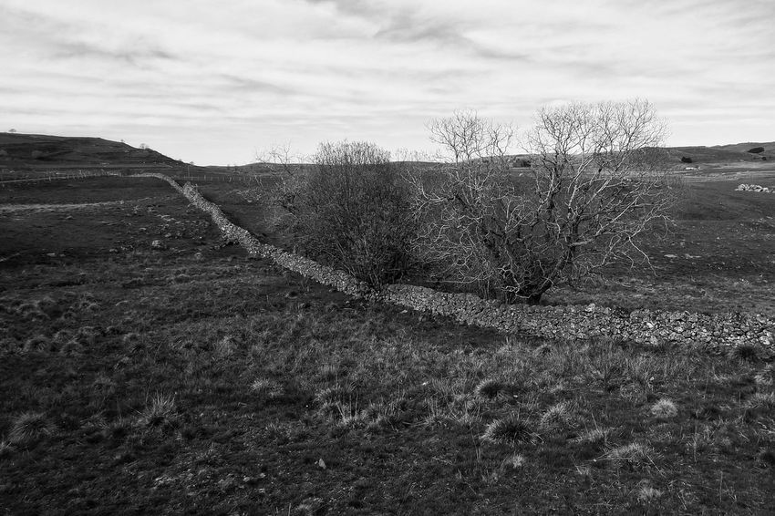 Aubrac - Sky Cloud - Sky Nature Landscape Bw_collection Noir Et Blanc Nature Rural Blackandwhite Bw Black & White Black And White Aveyron Bnw_collection Bw_lover Countryside Country Life Country Blackandwhite Photography Paysage No People Field Black And White Friday