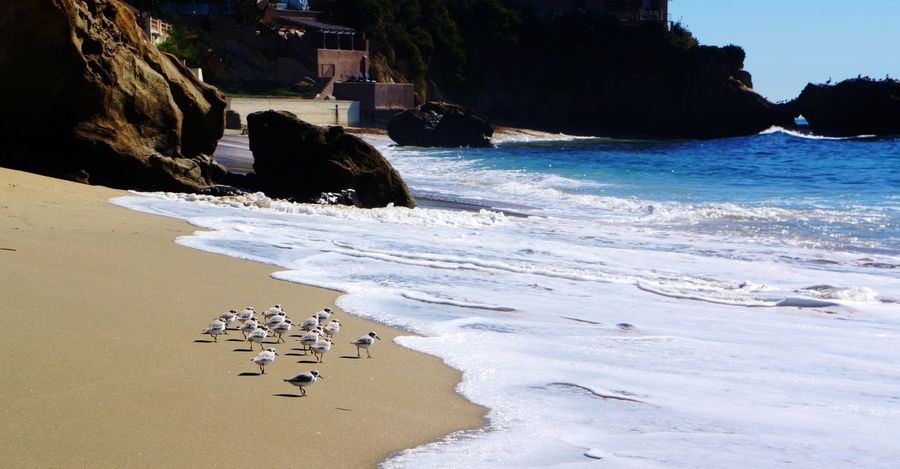 tiny pipers at the beach Beach Beauty In Nature Bird Blue Blue Wave Coastline Flock Of Birds Laguna Beach Outdoors Rock Formation Sand Sand Piper Shore Shoreline Sky The Essence Of Summer Tourism Tranquility Travel Destinations Vacations Water Wave