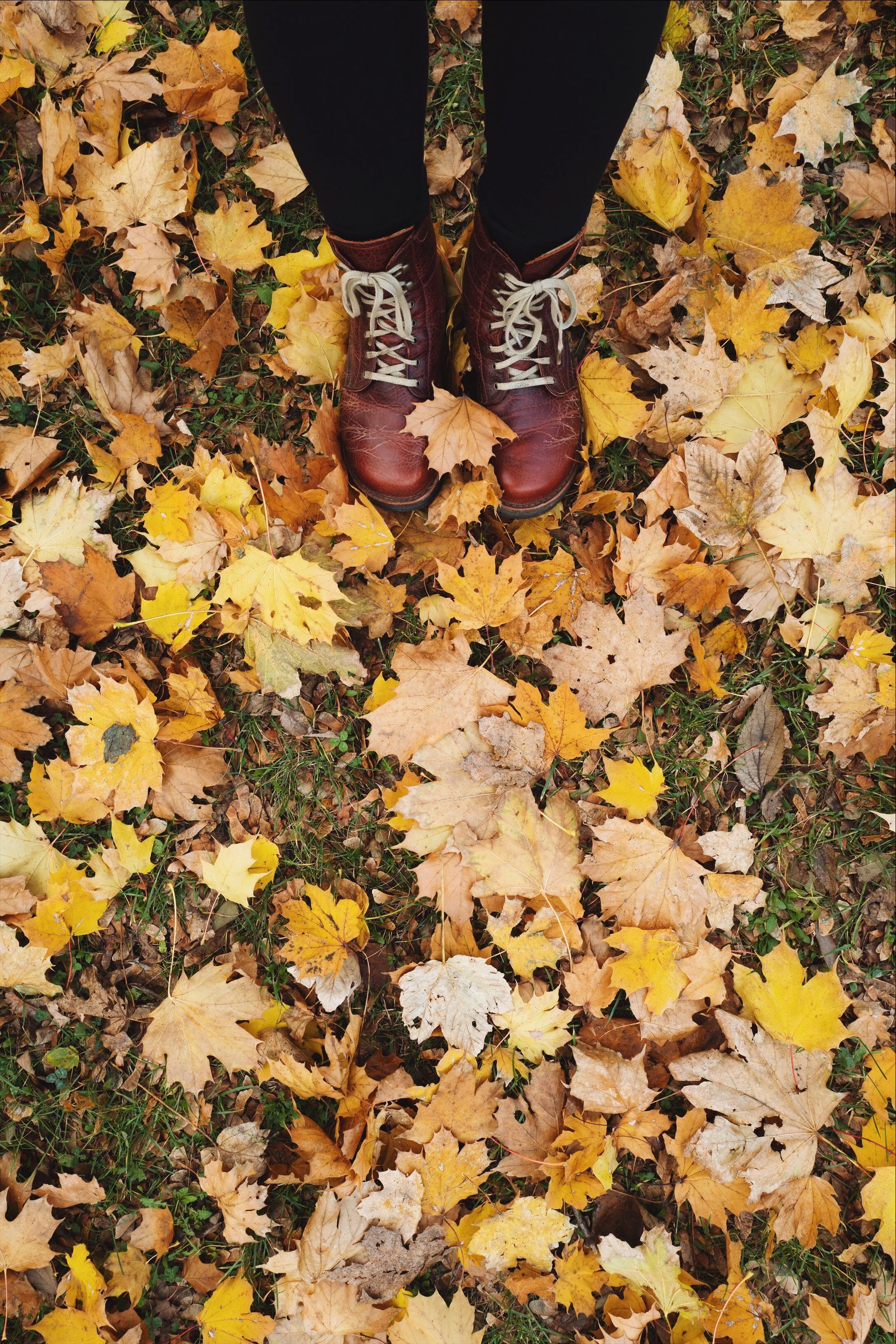 low section, human leg, autumn, shoe, one person, human body part, body part, real people, plant part, change, leaf, leaves, lifestyles, day, nature, standing, falling, high angle view, unrecognizable person, beauty in nature, maple leaf, outdoors, human foot, human limb, natural condition, autumn collection