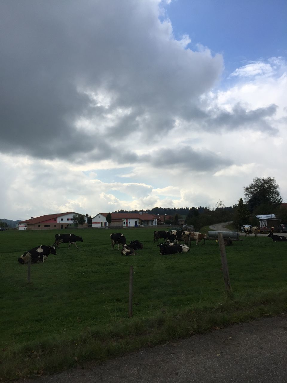sky, landscape, field, grass, cloud - sky, cow, nature, no people, outdoors, day, architecture, scenery, tree, beauty in nature, mammal