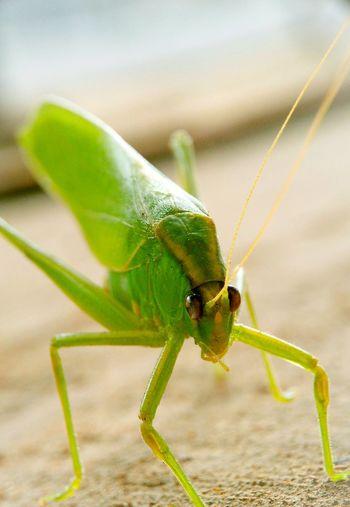 Green Spesies