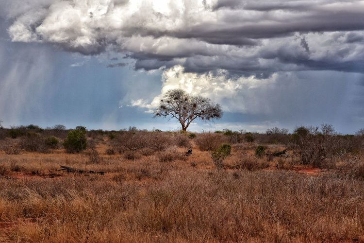 Sky Cloud - Sky Plant Tree Environment Landscape Scenics - Nature Nature No People Beauty In Nature Land Tranquil Scene Day Tranquility Field Non-urban Scene Outdoors Grass Animals In The Wild Arid Climate Rain Storm Cloud Storm Lone Tree Vast Wilderness Dry Dark Rays Of Light