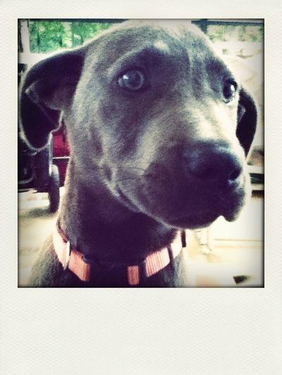 New Puppie<3