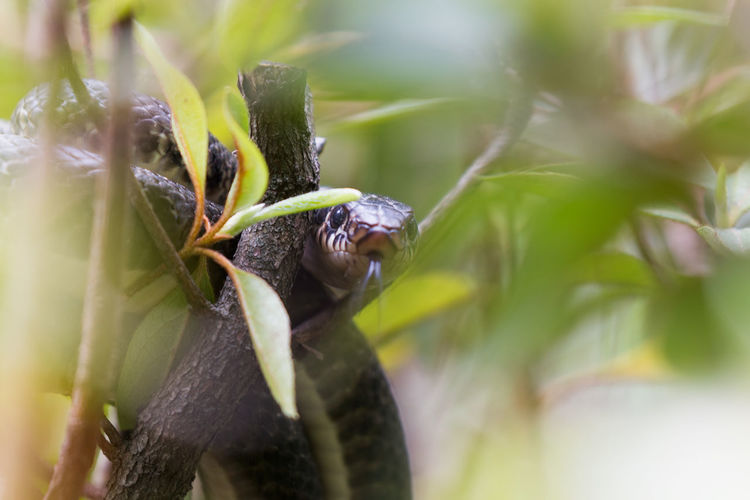EyeEm Best Shots Nature Nature Photography Snake Wildlife Photography Animal Animal Wildlife Animals Eyemphotography Grass Snake Nature_collection Naturelovers Wildlife