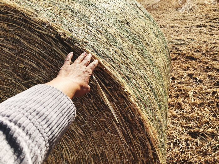 Cropped Hand Of Person Touching Hay Bale On Field