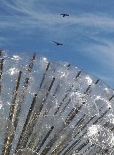 'Bird's In The Sky, Summer In The Air' Fountain Water Blue Sky Blue Beautiful Day Springtime Soon Summer Oslo 2018 KJ✨ Bird Water Flying Seagull Sea Bird Spread Wings The Street Photographer - 2018 EyeEm Awards