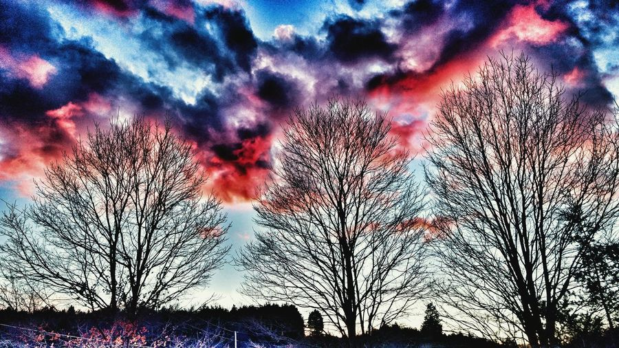 Full frame shot of tree against sky during sunset