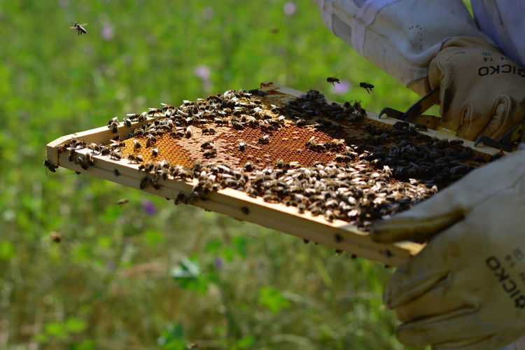 Bees Close-up Honey Pollination