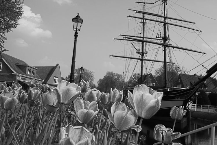Black & White Flower G Large Group Of Objects No People Papenburg Sailing Ship Sky Spring