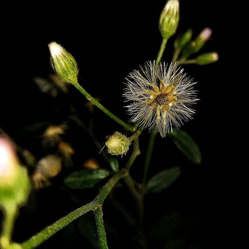 Wild Flower Flower Insect Focus On Foreground Plant No People Animals In The Wild Animal Wildlife One Animal Outdoors Close-up Fragility Growth Nature Black Background Beauty In Nature Flower Head Animal Themes Day Freshness EyeEmNewHere